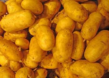kartoffel sieglinde de francesca